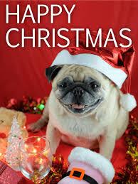 animal christmas cards birthday u0026 greeting cards by davia free