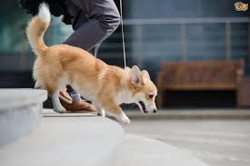 Go Down Stairs by Teaching A Dog To Go Up And Down Stairs Pets4homes