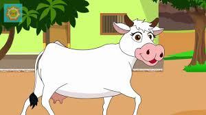 cow cartoon rhyme for kids youtube