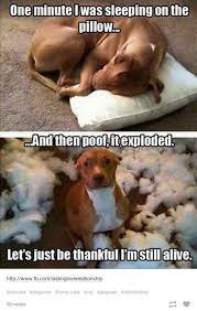 Funny Animal Memes Tumblr - tumblr has a good handle on the mindset of dogs 26 photos memes