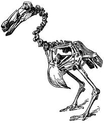 dodo skeleton clipart etc