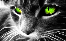 imagenes abstractas hd de animales cool eyes cat 3d wallpapers hd hd wallpaperd eyes pinterest