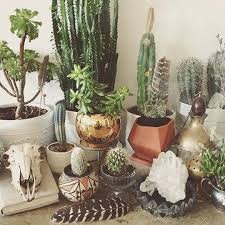 950 best succulents cactus u0026 other pretty plants images on