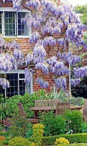 victorian planting make the most of your home with plants that