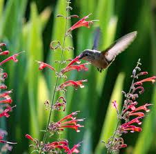 wshg net gardening to attract hummingbirds and butterflies