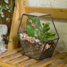 wall geometric hexagon glass terrarium box succulent plant planter
