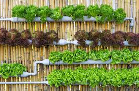 africa needs its own version of the vertical farm to feed growing