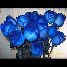 blue roses delivery blue roses via http blue roses delivery blue