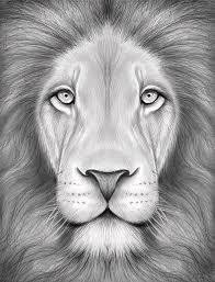 lion drawings fine art america