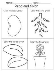 plant worksheets for kindergarten plant best free printable