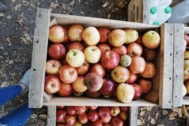 apple picking twinspiration