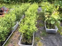 native plant restoration juneau native plant nursery supports local restoration projects