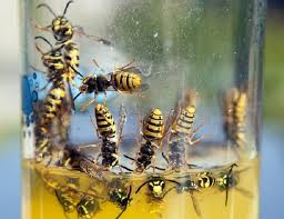 Best Way To Get Rid Of Mosquitoes In Your Backyard Genius Ways To Get Rid Of Wasps U0026 Keep Them Away