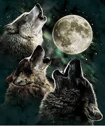 kitsunes and wolves images howling at the moon wallpaper and