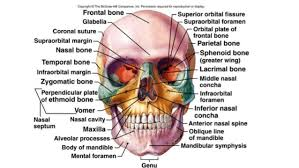 Anatomy Of The Human Body Bones Introduction To 206 Bones Of The Human Body