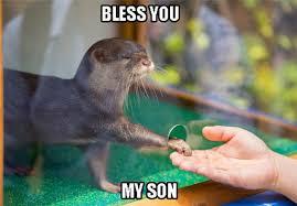 Otter Memes - 18 otter memes that will make you lol azula for the love of oceans