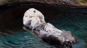 Sea Otter Meme - sea otter gives itself massage at lisbon aquarium video huffpost