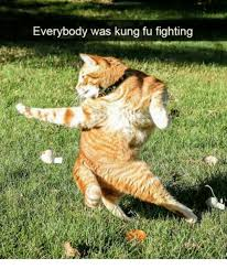 Kung Fu Meme - 25 best memes about everybody was kung fu everybody was kung