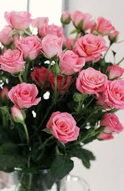 Meaning Of Pink Roses Flowers - best 20 beautiful rose flowers images ideas on pinterest love