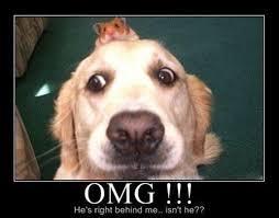 Dog Teeth Meme - dog memes home facebook