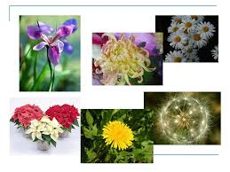 14 4 the life cycle of flowering plants biology 1001 november 28