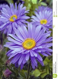 Birth Flowers By Month - best 20 birth flowers ideas on pinterest birth month meanings