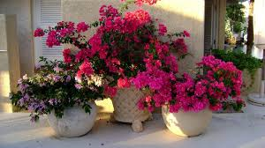 Beautiful Flowers Image 15 Beautiful Flower Pots That Will Inspire You Mostbeautifulthings