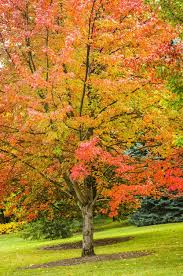 top 10 fast growing trees birds blooms magazine