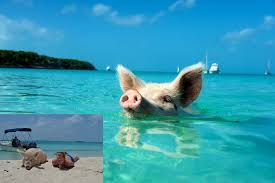 amazing vacation destinations for animal