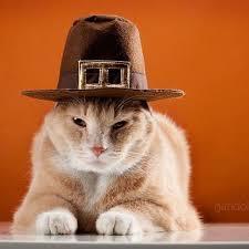 Thanksgiving Cat Meme - 58 best 43 cats thanksgiving gobble gobble images on pinterest