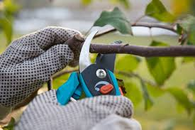 Types Of Hoes For Gardening - gardening tools articles gardening know how