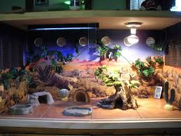 best 25 bearded dragon cage ideas on pinterest bearded dragon