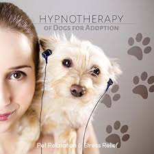 dog photo albums for pets relaxation songs dogs and friends while you