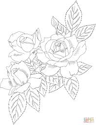 cecile brunner or polyantha rose bush coloring page free