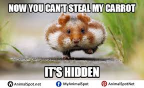 fat hamster memes different types of funny animal memes