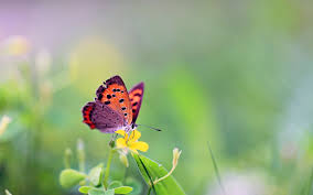 download wallpaper 1920x1200 butterfly flower grass leaves
