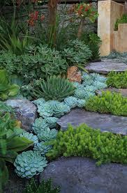 giardini rocciosi in ombra un giardino di piante grasse 20 esempi stupendi da cui trarre