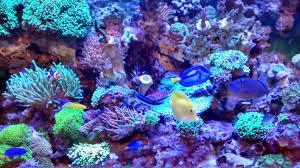 sb reef lights review day 4 sb reef lighting led youtube