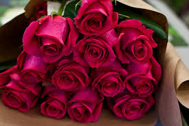 Flowers For Valentines Day How To Keep The Bloom On That Mother U0027s Day Rose The New York Times