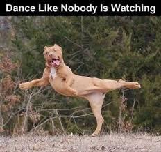 Dancing Dog Meme - i can has cheezburger dancing funny animals online cheezburger
