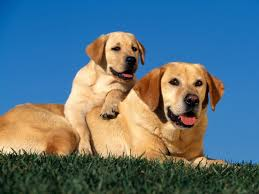 types of dogs hd types of dogs images