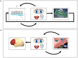 frontiers the role of working memory for cognitive control in