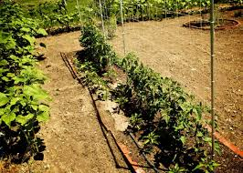 Growing Pumpkins On A Trellis The Indestructible Diy Tomato Trellis The Petite Farmstead