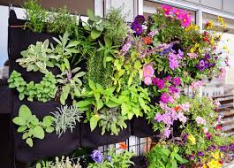 Vertical Garden Pot - florafelt vertical garden planters plants on walls
