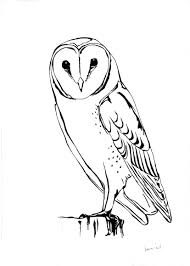 brown hawk owl clipart bird face pencil and in color brown hawk