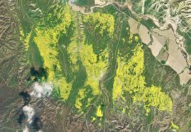 Bloom California U0027s Super Bloom So Intense It U0027s Visible From Space