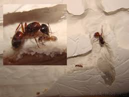 ant farms how to build your own formicarium 6legs2many