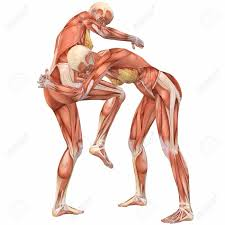 Human Body Female Anatomy 435 Martial Arts Stock Illustrations Cliparts And Royalty