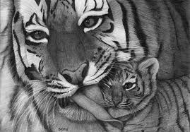 tigers by bajan art on deviantart