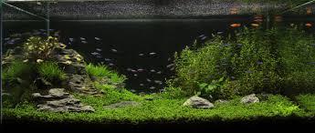 japanese aquascape my first iwagumi aquascape journal page 2 akvaario ja